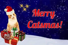 christmas cat names cat names city