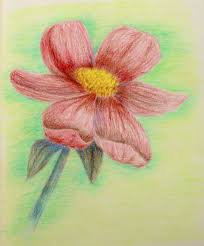 color pencil sketches of flowers colour pencil drawing of flowers