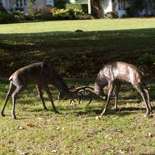 large rutting stag metal ornaments large bronze deer candle and
