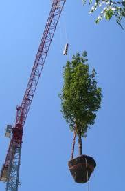 tree installation purchase tree tree spades big tree supply