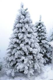 pine tree snowy tree pencil and in color pine tree