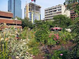 The Urban Garden Vancouver The Vancouver Resident U0027s Guide To Alternative Gardening