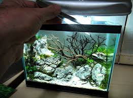 Aquascape Shop Planted Tank Aquascape Nano Tank Aquascaping Planted Tanks