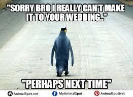 Socially Awkward Penguin Memes - socially awkward penguin memes png
