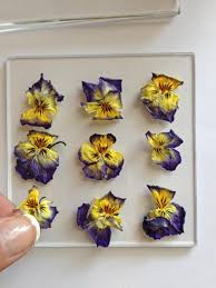 pressed flowers make pressed flower coasters hgtv