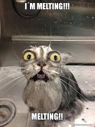 Melting Meme - i m melting melting cat bath make a meme