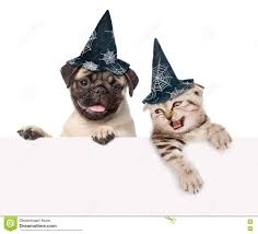 halloween hats cat and dog with hats for halloween looking out because of the