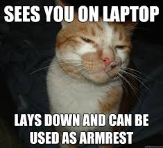 Cat Laptop Meme - cool cat craig memes pinterest meme and memes
