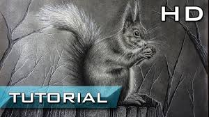 how to draw a realistic red squirrel step by step with pencil