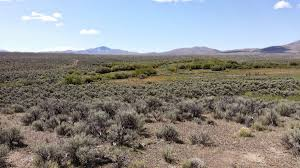 programs natural resources native plant communities new mexico wildlife u0026 land environmental incentives