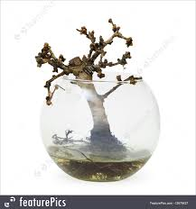 plants failed bonsai tree dead small plant in aquarium stock