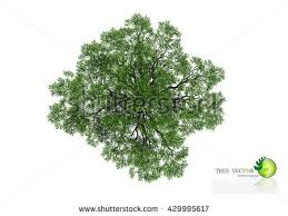 trees top view landscape vector illustration stock vector