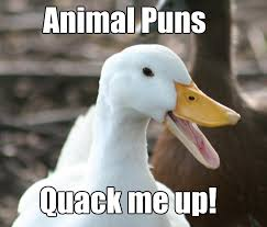 Animal Pun Meme - animal pun memes comics and memes