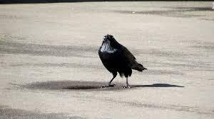 Crow Meme - insanity crow know your meme