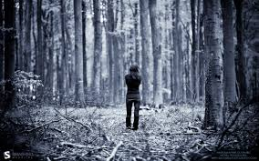 in the woods into the woods a self reflective journey of who i am