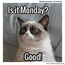 Angry Cat Good Meme - funny monday meme grumpy cat 3 for the animals pinterest