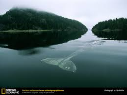 whale picture whale desktop wallpaper free wallpapers download