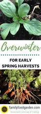 When To Plant Spring Vegetable Garden by Best Vegetables To Overwinter Zone 5