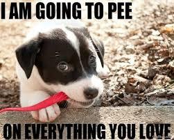Carpet Cleaning Meme - 46 best cleaning humor images on pinterest cleaning humor ha ha