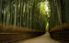 beautiful path in bamboo forest hd wallpaper from gallsource com beautiful path in bamboo forest hd wallpaper from gallsource com
