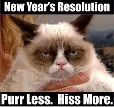 Grumpy Cat New Years Meme - new year s resolutions grumpy cat pinterest grumpy cat cat