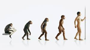 didn t evolve from apes evolution 03