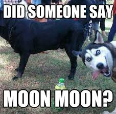 Moon Moon Memes - did someone say moon moon overtly sexual husky quickmeme