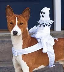 dog halloween costume dog pet halloween costume accessories grim reaper