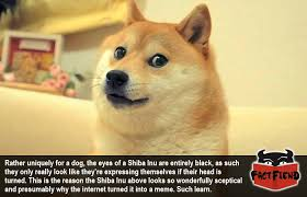 Squinty Eyes Meme - shiba inu eyes are the reason they re so hilarious fact fiend