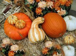thanksgiving animated gifs free thanksgiving desktop wallpapers group 72