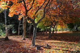 memorial plaques memorial plaques deciduous trees in autumn stock photo