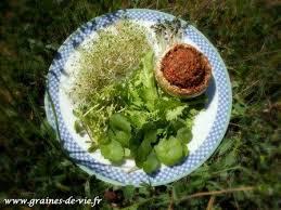 cuisine vivante pour une santé optimale photo des créations alimentation vivante du mois de mars 2012