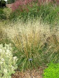 27 best ornamental grasses images on ornamental