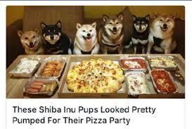 Meme Shiba Inu - the best shiba inu memes memedroid