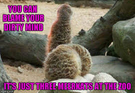 Dirty Minded Memes - you can blame your dirty mind it s just three meerkats at the zoo meme