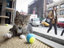 Coffee Shop In New York Nyc Cat Café Business Insider