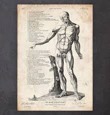 Human Anatomy Full Body Picture Full Body Human Anatomy Print Vi Codex Anatomicus