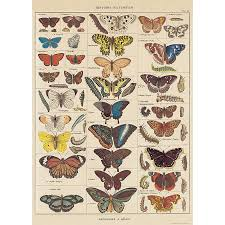 cavallini poster poster insects history cavallini co