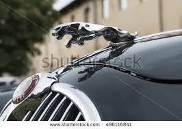 jaguar car stock images royalty free images vectors