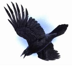 ravens clipart cliparts and others art inspiration