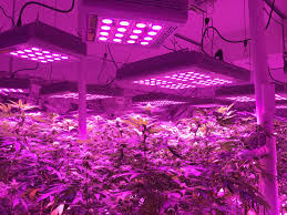 best led weed grow light your best led grow light for growing medical cannabis easyhydro