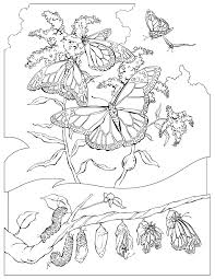 national geographic coloring pages kids coloring free kids