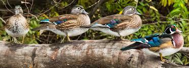 staff american bird conservancy