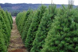 the ultimate guide to u cut christmas tree farms portland monthly