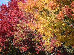 autumn in new york no it s vacaville and happy thanksgiving