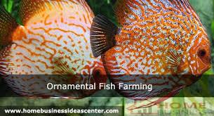 fish farming home based business ideas