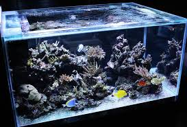Live Rock Aquascaping Ideas Looking For Aquascaping Inspiration Reef Central Online Community