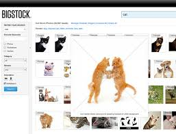 How To Make Meme Photos - photoshop basics how to make a really funny cat meme bigstock blog