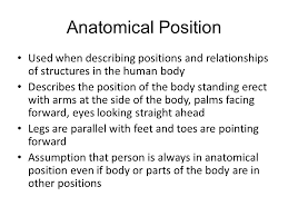 Human Anatomy And Physiology Terminology Medical Terminology Lesson 2 Anatomy And Physiology Ppt Video