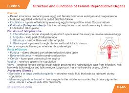 Anatomy Of Reproductive System Female Learnhive Icse Grade 10 Biology Human Anatomy And Physiology